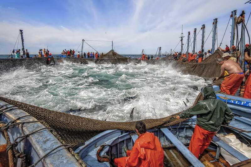 Resultado de imagen para pesca Almadraba