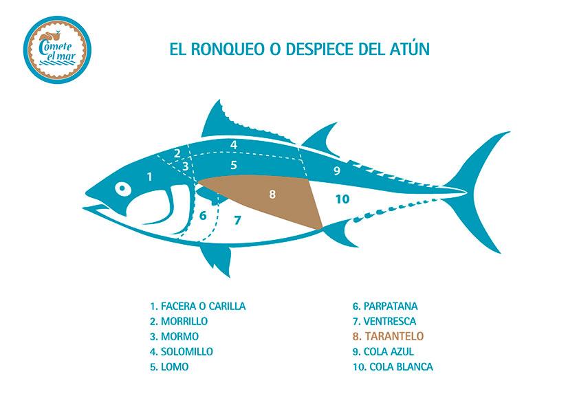 tarantelo_ronqueo_atun_rojo_almadraba